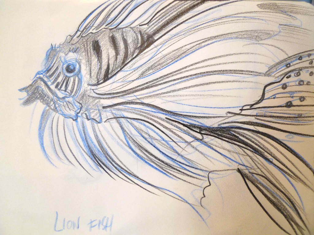 Lion fish sketch